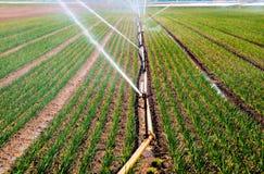 Jet d'eau dans l'agriculture Photographie stock