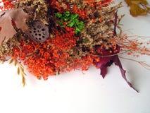 Jet de bouquet d'automne Images stock