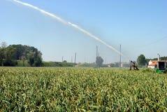 Jet della pompa che innaffia un campo coltivato Immagini Stock