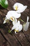 Jet des orchidées blanches de phalaenopsis Photo libre de droits