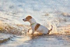 Jet du chien n de l'eau Photos stock