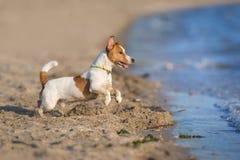 Jet du chien n de l'eau Image libre de droits