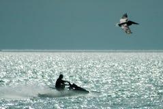 Jet-esquí y pelícano Fotografía de archivo libre de regalías