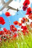 Jet over poppy flowers Royalty Free Stock Image