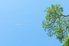Jet trail. Looking up the tree with plane passing by Royalty Free Stock Photography