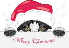 Jeter un coup d'oeil le chat drôle dans un chapeau de Noël Photos libres de droits