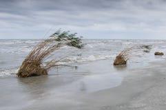 Jetsam bij de kust van de Zwarte Zee Royalty-vrije Stock Foto's