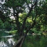 Jetsaonoi de cascade Photographie stock libre de droits