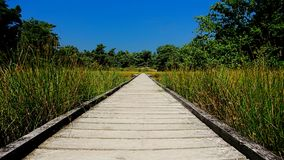 Jetty in the colorful national parc of Maasduinen, the Netherlands stock images