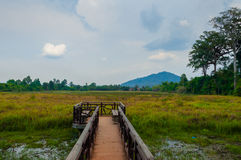 Jetty into the green with mountain in background Stock Photo