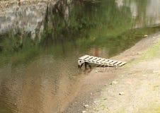 Jetty na rzece Zdjęcie Stock