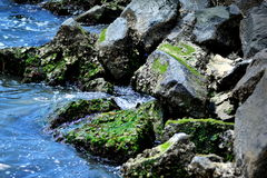 Jetty rocks at eastern shore royalty free stock photography