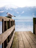Jetty with sea gull (93) Stock Image