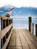 Jetty with sea gull (94) Stock Photos