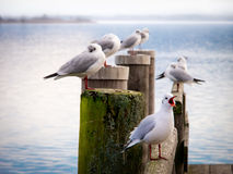 Jetty with sea gull 97) Stock Photo