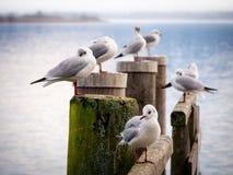 Jetty with sea gull (96) Royalty Free Stock Photos