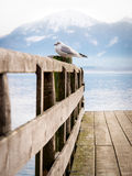 Jetty with sea gull 92) Stock Photography