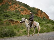 Rider on white horse in green environment stock photography