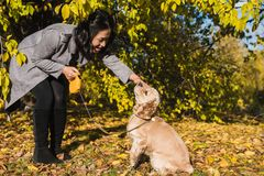 Jeu asiatique de femme avec le chien en parc d'automne photographie stock