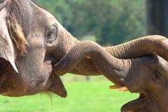 Jeu d'éléphants Image libre de droits