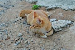 Jeu d'amour de chat extérieur Photos stock
