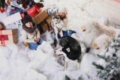 Jeu d'enfants avec des chiens à côté d'arbre de Noël Photographie stock libre de droits