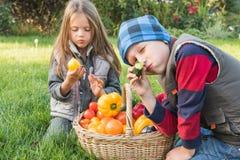Jeu d'enfants dans le jardin sur l'herbe Photographie stock libre de droits