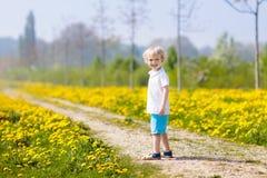 Jeu d'enfants Enfant dans le domaine de pissenlit Fleur d'été Photographie stock libre de droits
