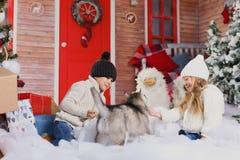 Jeu de bel enfant avec le chien du chien de traîneau de race dans l'intérieur de nouvelle année avec l'arbre de Noël Images stock