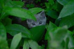 Jeu de cache-cache de Kitty photographie stock libre de droits