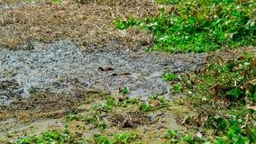 Jeu de canards dans l'eau sale Photos libres de droits