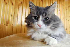 Jeu de chat Image libre de droits