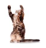 Jeu de chaton Image stock