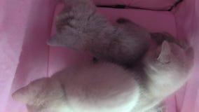 Jeu de chats dans une tente d'animal familier clips vidéos