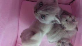 Jeu de chats dans une tente d'animal familier banque de vidéos