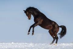 Jeu de cheval Photographie stock libre de droits