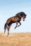 Jeu de cheval de baie photos libres de droits