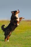 Jeu de chien extérieur photographie stock libre de droits