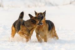 Jeu de chiens dans la neige photographie stock