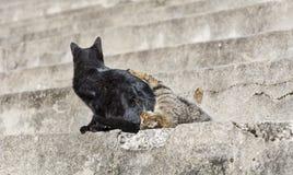 Jeu de deux chats Photos libres de droits
