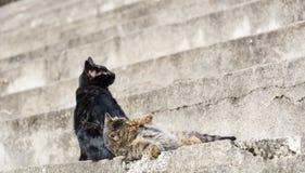 Jeu de deux chats Photos stock