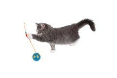 Jeu de l'heure pour le chaton mignon 6 Photo libre de droits