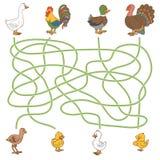Jeu de labyrinthe : aidez le jeune pour trouver leurs parents (oiseaux de ferme : penchez-vous, illustration libre de droits