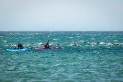 Jeu de nageurs avec les dauphins communs du Nouvelle-Zélande Photo libre de droits