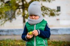 Jeu de petit garçon avec des châtaignes dans le jour d'automne Image stock
