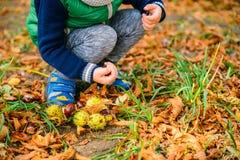 Jeu de petit garçon avec des châtaignes dans le jour d'automne Photos stock