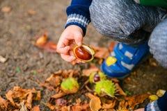 Jeu de petit garçon avec des châtaignes dans le jour d'automne Images libres de droits