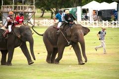 Jeu de polo d'éléphant. photo libre de droits