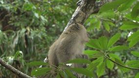 Jeu de singes dans un arbre banque de vidéos