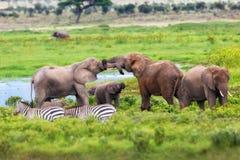 Jeu des éléphants Photographie stock libre de droits